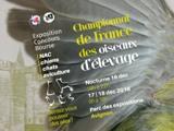 RÉSULTATS CONCOURS 2016 DES ADHERENTS DU CLUB