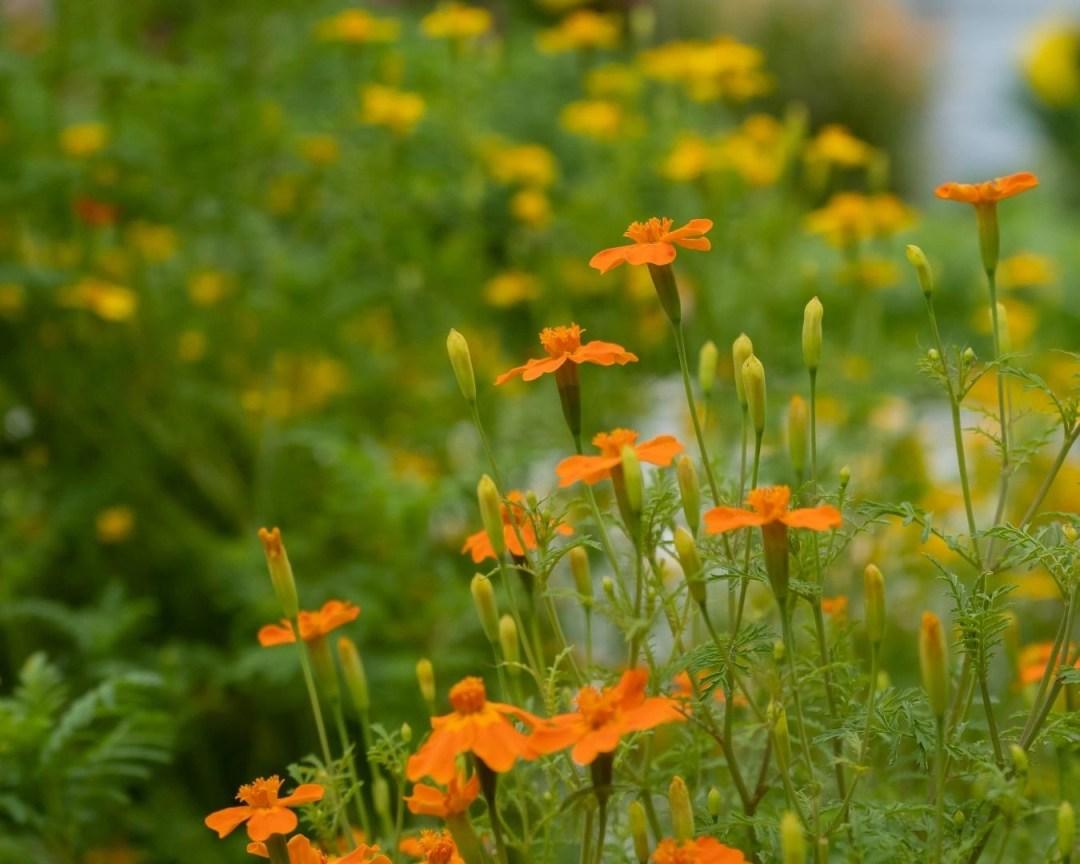Les Sourciers Hydroponie fleurs