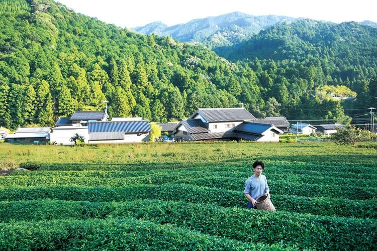 Miyazakien Tea Garden and the Master , Atsushi UMEMURA