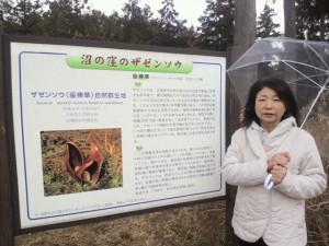 富士見沼窪のザゼンソウ案内板