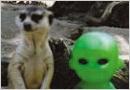 AB with meerkats