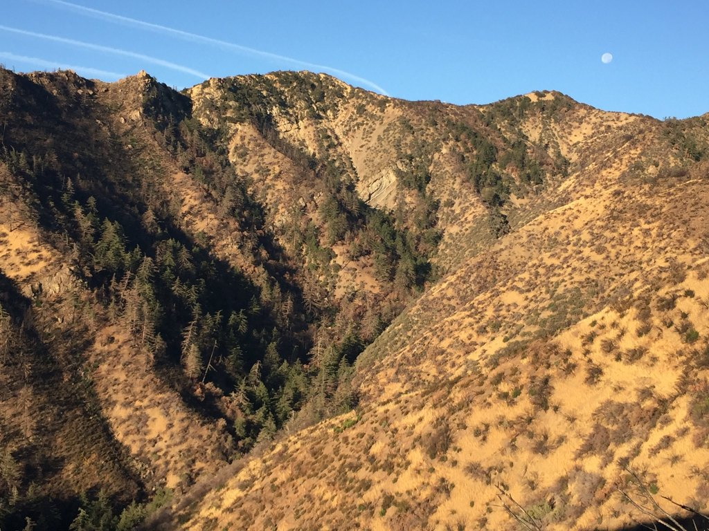 los padres forest