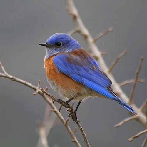 ovlc bird walk