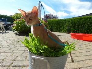 Nefer tråkker i salaten