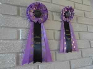 Champion og CACIB