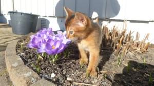 Ojas Harmony møter våren