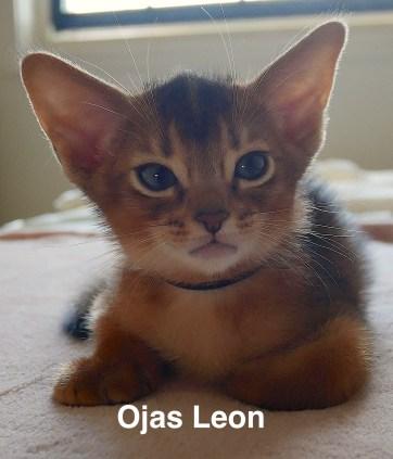 Ojas Leon