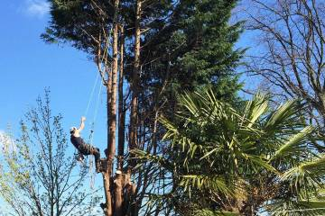 An example of tree removal by Tree Surgeons Cheshire