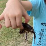 2020年 鶴見緑地公園でザリガニ釣り!簡単に釣れる方法を写真で解説します!
