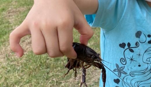 鶴見緑地公園でザリガニ釣り!簡単に釣れる方法を写真で解説します!