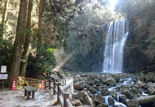 今の時期の桜滝