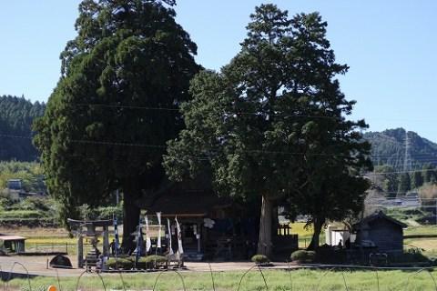 老松神社。御神木が神秘的でした。