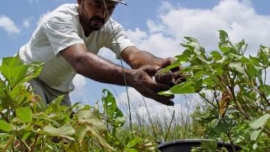 Foto de Agricultores familiares cearenses contarão com R$ 453 milhões pelo Plano Safra 2020/2021