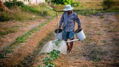 Foto de Pequenos produtores de Porteiras e outros 11 municípios cearenses recebem mais de R$ 1 milhão em apoio à produção agrícola