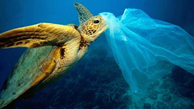 Photo of Mundo: Cientistas desenvolvem por acaso enzima devoradora de plástico; Saiba mais