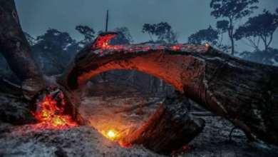 Foto de Por 60 dias governo federal proíbe queimadas em todo o território nacional
