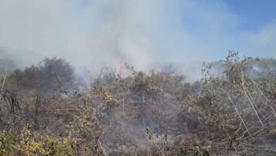 Foto de Pantanal: Governo reconhece situação de emergência em Mato Grosso do Sul