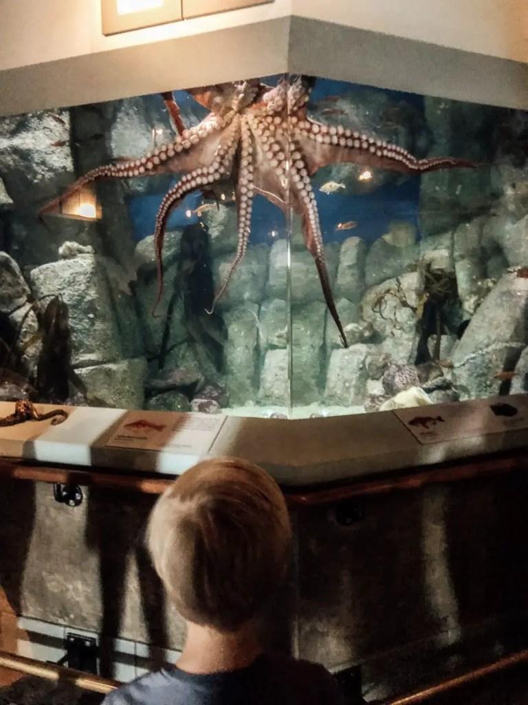 Monterey Bay Aquarium octopus