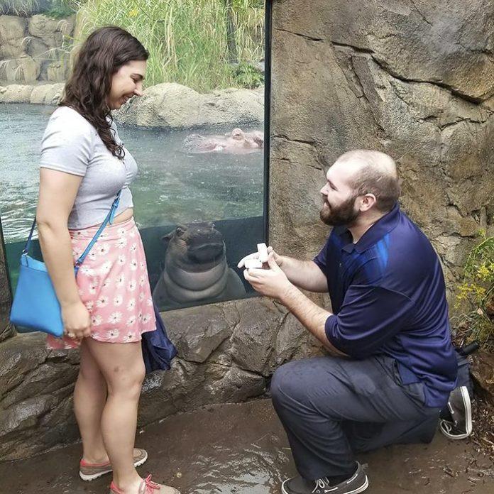 Pareja de novios que se comprometieron frente al estanque de Fiona una hipopótamo