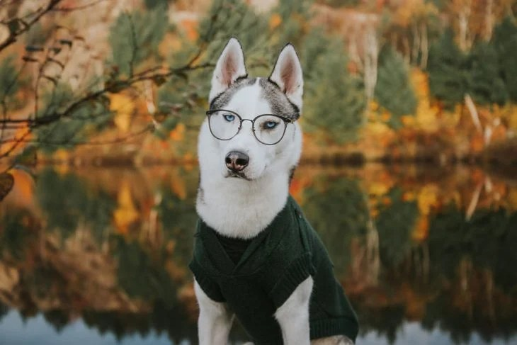 Perrito huskie usando lentes y camisa mientras está parado frente a un lago