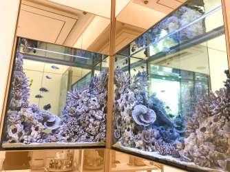 Saks 5th Avenue La Mer Aquarium