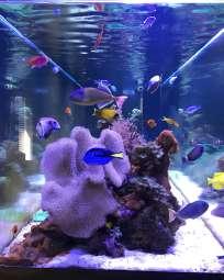 900 Gallon Reef Aquarium
