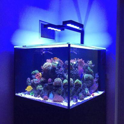 Williamsburg Coral Reef Aquarium