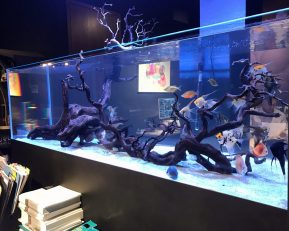 Midtown Showroom Freshwater Aquarium