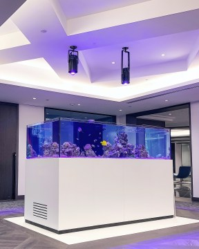 Engelwood Cliffs Hedge Fund Aquarium