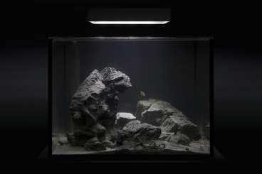 custom rimless aquariums