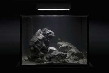 custom rimless aquariums