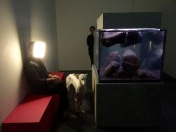 how much are custom aquariums