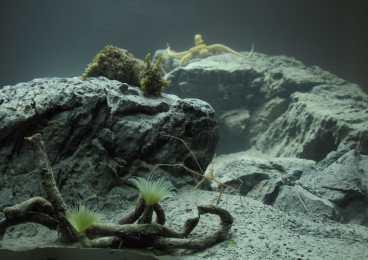 custom reef aquariums uk