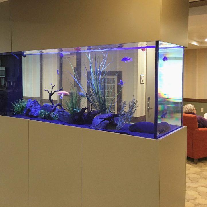 Freshwater Aquarium Five Town Nursing Facility