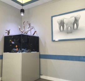Open Top Freshwater Aquarium / New Jersey Dental Office
