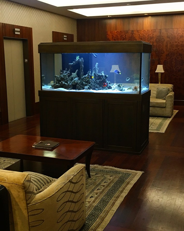 54th Street NYC Saltwater Aquarium