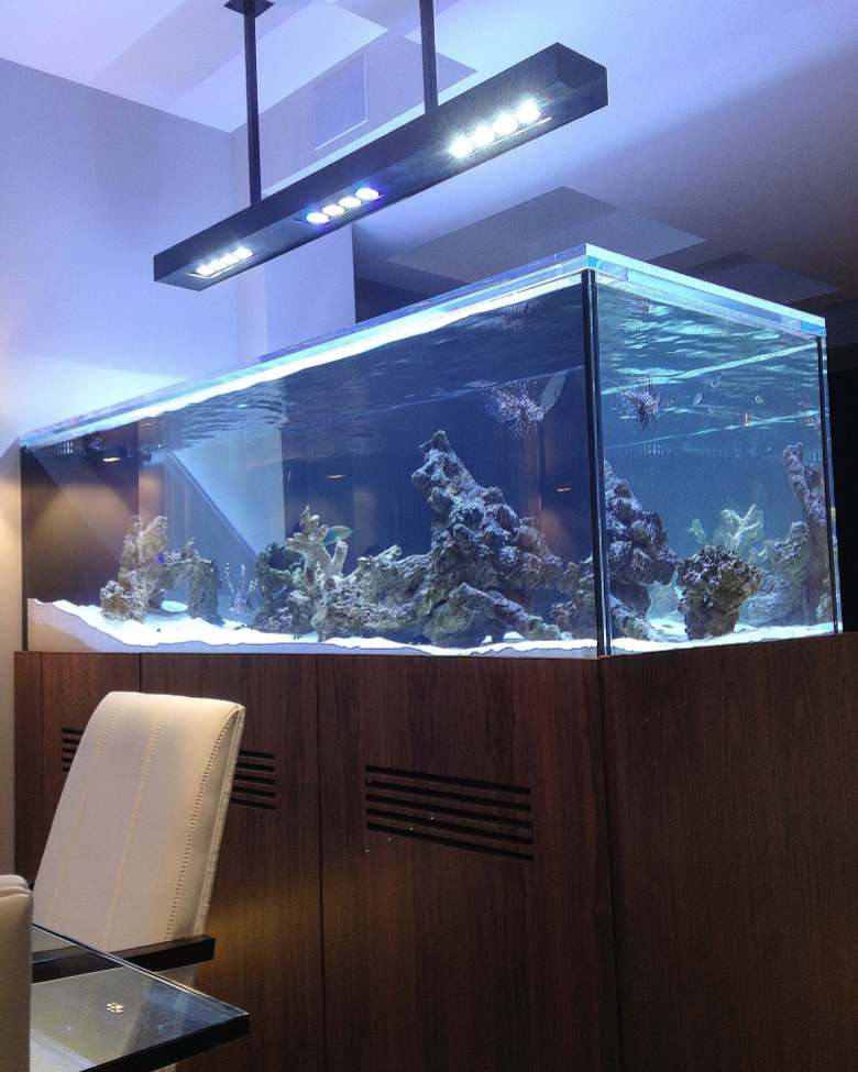 custom saltwater aquariums NYC