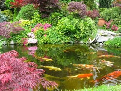Outdoor Japanese Koi Pond Upper Saddle River NJ