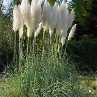 Trajnice za višino: tudi nizke rastline lahko razgibajo gredo