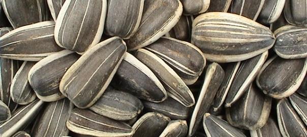 semena - shranjevanje semen
