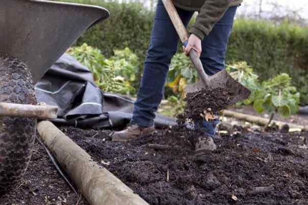 Lesni pepel kot okolju prijazno gnojiloza ekološki vrt