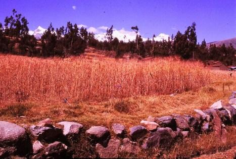 Wilcawain (Huaraz)