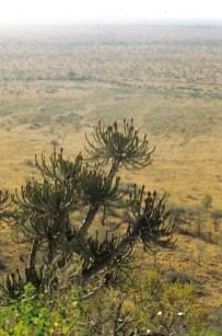 RSA 028 Kruger parc