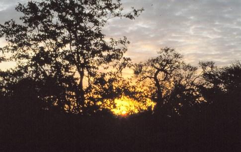 RSA 029 Kruger parc