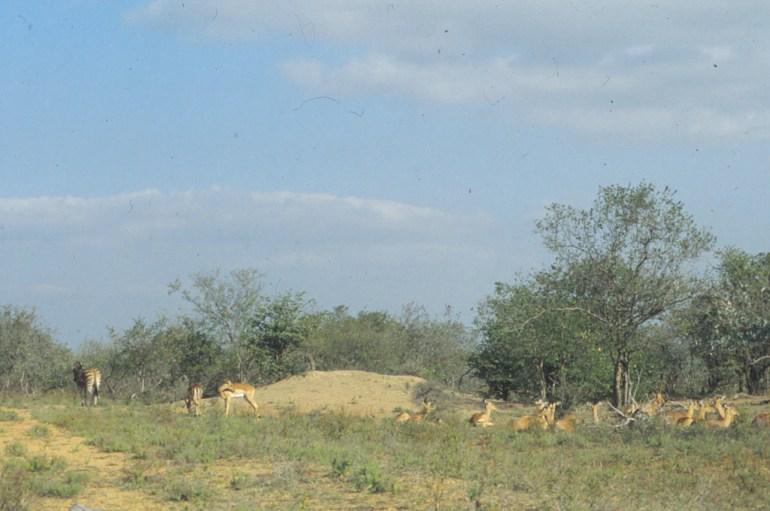 RSA 030 Kruger parc