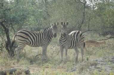 RSA 037 Kruger parc