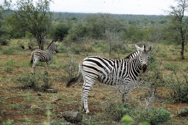 RSA 041 Kruger parc