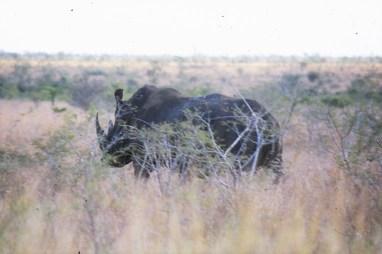 RSA 050 Kruger parc