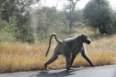 RSA 053 Kruger parc