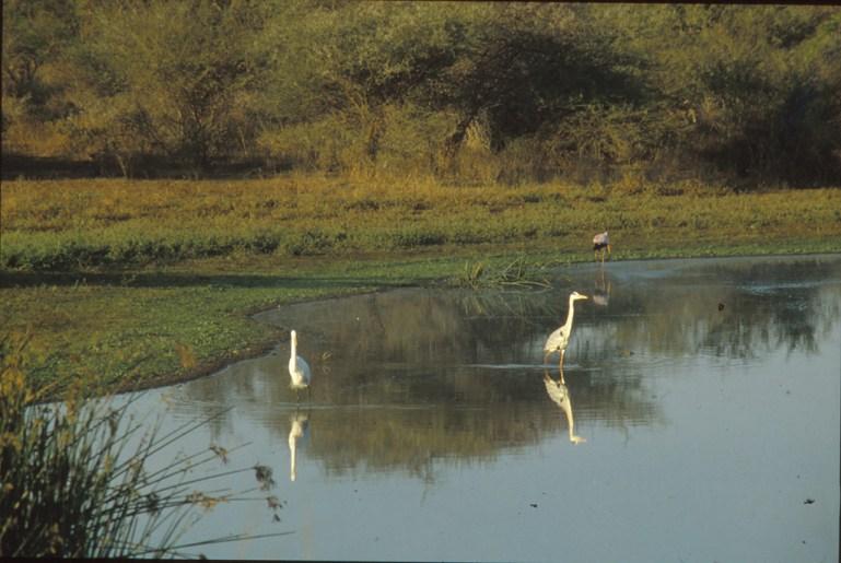 RSA 059 Kruger parc